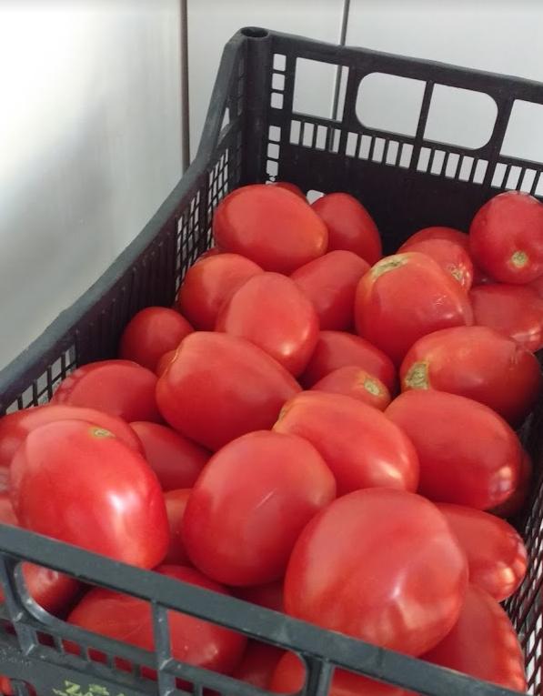 pomodori per la conserva